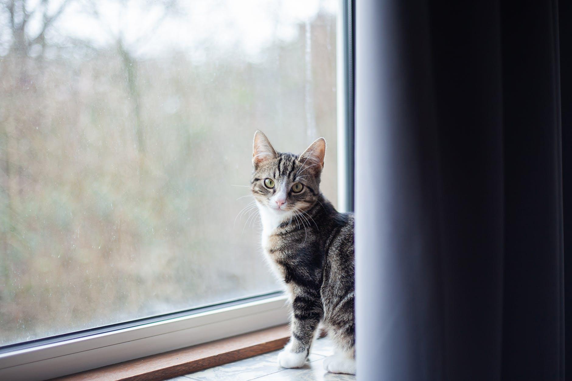 Como adaptar o seu lar para receber um pet